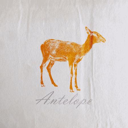 gazelle: vector vintage illustration of an antelope on the old wrinkled paper texture Illustration