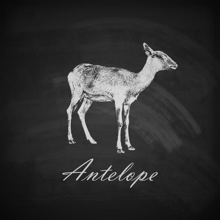gazelle: vector illustration of a chalk antelope on the blackboard texture
