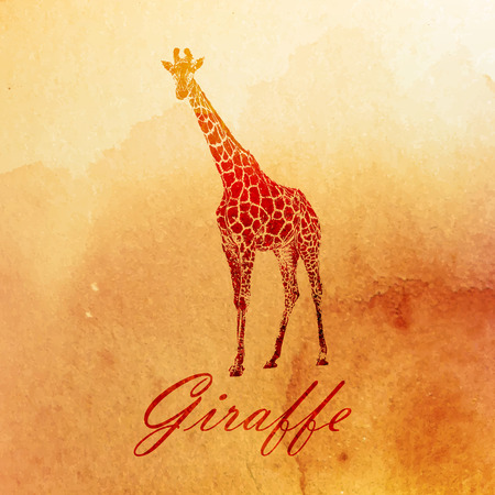 vector vintage illustration of a watercolor giraffe on the old paper texture Illustration