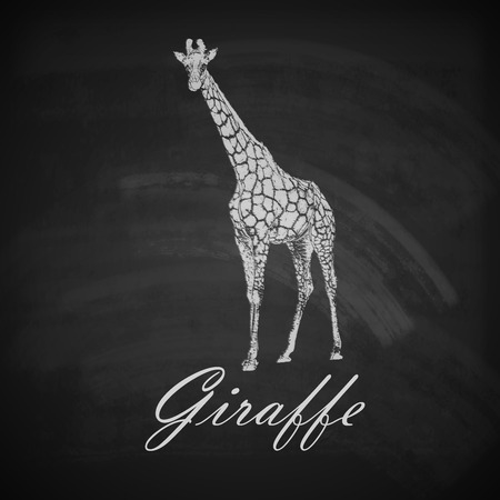 giraffe silhouette: vector vintage illustration of a chalk giraffe on the old dirty blackboard background
