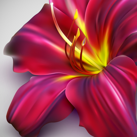 single flower:  illustration of realistic lily flower