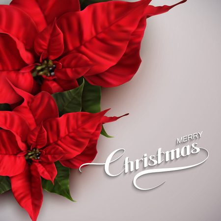 Merry Christmas. Vector Holiday Illustration With Lettering Label And Poinsettia Flowers