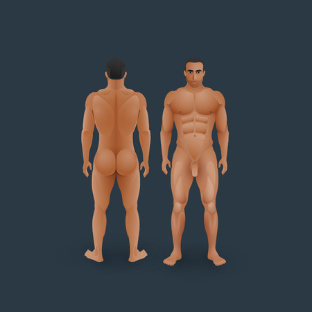 nude man: vector illustration of naked men body (front and back view) in flat style. medical concept