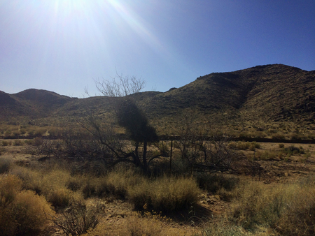 Mountains and cact in the Arizona desert under the blue sky