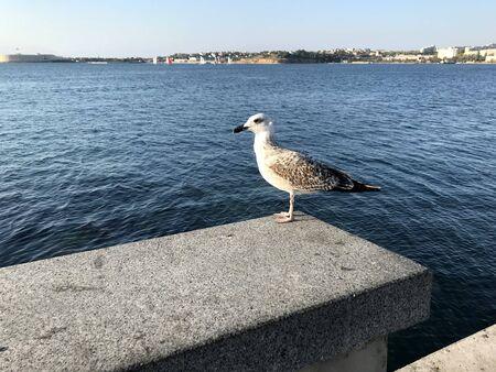 white bird seagull sits on a background of the sea Stok Fotoğraf