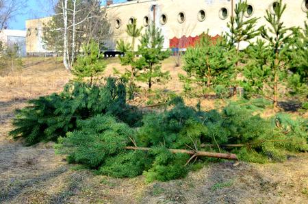 Illegal deforestation, destruction of nature, global catastrophe, the problem of ecology. Damage to Nature