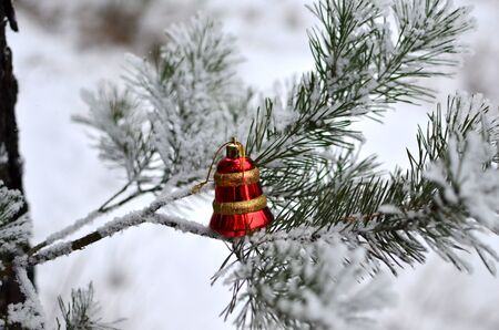 Christmas tree toy on a natural branch with pine tree needles on the snow background in forest.  Concept of Christmas, New Year and winter Xmas holidays, background, texture 写真素材