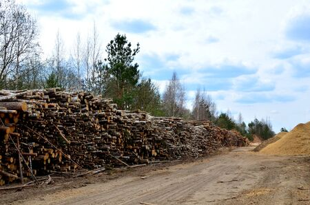 Logs stacked on logging and woodworking industry. A stock pile of timber, chopped down trees. Timber industry. De-forestation.