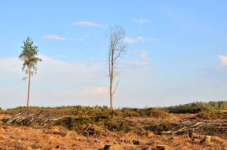 Cut trees in the forest. Deforestation and Illegal Logging, international trade in illegal timber