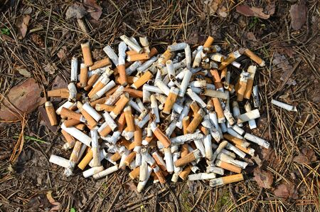A lot of burnt cigarette butts with some ash. Smoking as a global social problem. Nicotine addiction, anti-smoking.