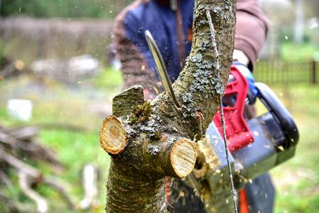 Professional gardener cuts branches on a old tree, with using a chain saw. Trimming trees with chainsaw in backyard home. Cutting fire wood in village. Caring for nature, ecology and improvement