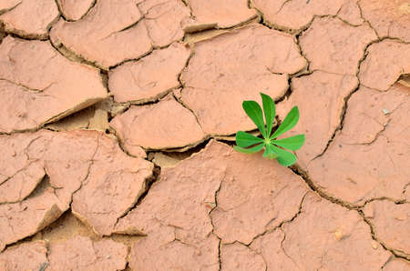 Green plants grew in dry cracked earth. Dry lake or swamp in the process of drought and lack of rain, a global natural disaster. Hydrological drought, ccological catastrophy, climate change Stock fotó