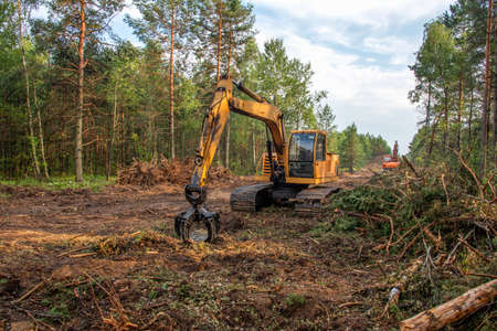 Excavator Grapple during clearing forest for new development. Tracked Backhoe with forest clamp for forestry work. Tracked timber Crane and Hydraulic Grab log Loader.
