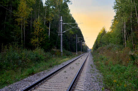 Railroad through the green forest on the sunset background