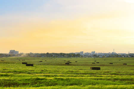 Hay in rolls in stored on green field on sunset background at countryside. Golden haystack and Harvesting dry grass for agriculture. Ecological fuel in straw briquettes. Biofuel production