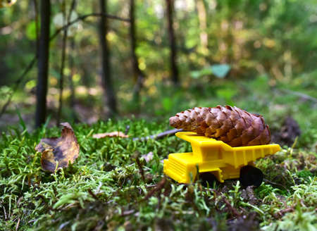 Toy truck transports a big spruce cone in the forest against a background of green moss and trees. Children playing a game in wildlife