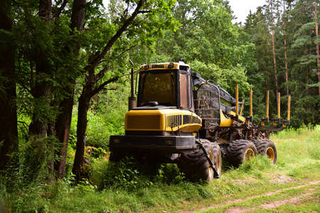Crane forwarder machines at during clearing of a plantation. Wheeled harvester transports raw timber from the felling site out to a road for collection by a truck. Standard-Bild