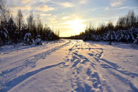 Snowy road in winter forest on sunset background. Awesome winter landscape. A snow-covered path among the trees in the wildlife. Forest in the snow. Tire tracks from a car that ran in the snow