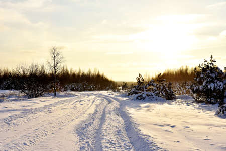 Snowy road in winter forest on sunset background. Awesome winter landscape. A snow-covered path among the trees in the wild forest. Forest in the snow. 免版税图像