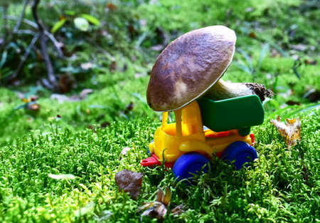 Funny toy truck transports a natural Porcini Cep White Mushroom in the forest against a background of green moss and trees. Children playing a game. Mushrooming harvesting season in wildlife