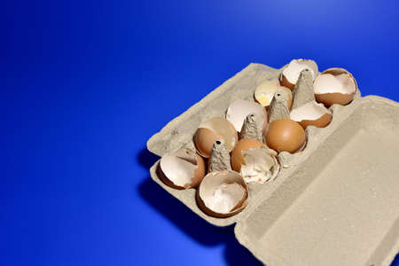 Broken Egg Shel in a paperboard on blue background. Chicken cracked eggs. Eggshell concept. Ð¡hicks ran away from the chicken mother. Farming and agriculture concept