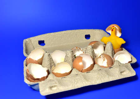 Chicken in a hen's egg among the broken empty eggs in a paperboard on blue background. Broken egg and born chick. Ð¡hicks ran away from the chicken mother. Farming and agriculture concept. Stock fotó