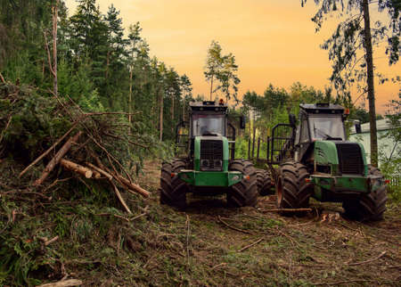Crane forwarder machines at during clearing of a plantation. Wheeled harvester transports raw timber from the felling site out to a road for collection by a truck. Harvesters, forest Logging machines Banque d'images