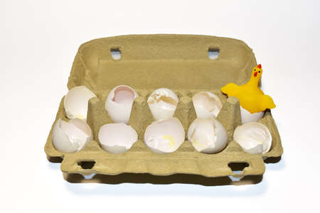 Chicken in a hen's egg among the broken empty eggs in a paperboard on white background. Broken egg and born chick. Ð¡hicks ran away from the chicken mother. Farming and agriculture concept.