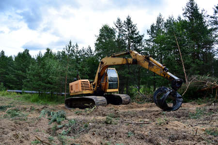 Excavator Grapple during clearing forest for new development. Tracked Backhoe with forest clamp for forestry work. Tracked timber Crane and Hydraulic Grab log Loader. Banque d'images