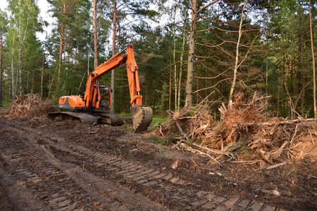Excavator clearing forest for new development. Orange Backhoe modified for forestry work. Tracked heavy power machinery for forest and peat industry.