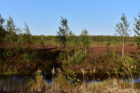 View of a small river in the forest against the background of a peat extraction field. Mining and harvesting peatland. Environmental disaster for nature. Peat bogs and wetlands