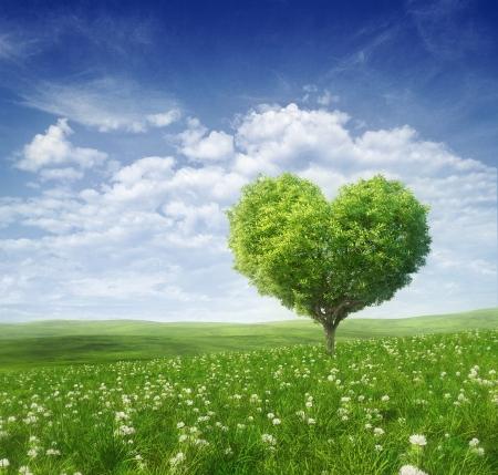 hart bloem: Boom in de vorm van hart, Valentijnsdag achtergrond, Stockfoto