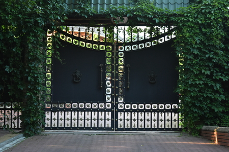 Old iron ornament gate and fence overgrown with green Parthenocissus in front of a house. Banque d'images - 118388134