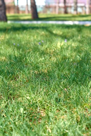 A green meadow in the park, an ideal place for relaxation and parties. lawn