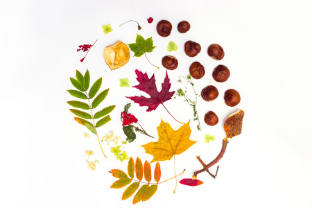 chestnut and maple leaves on a white background Imagens