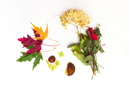 fall colors: chestnut and maple leaves on a white background Stock Photo