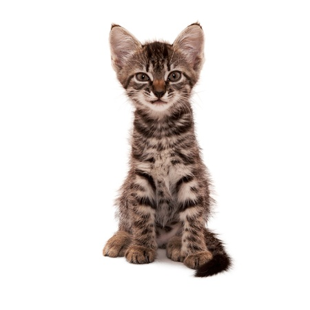 gray striped kitten with a skeptical grin isolated white Stock Photo - 14624442