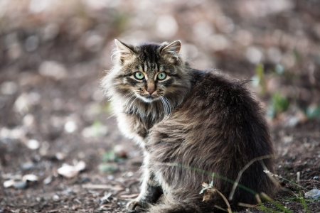 close up of a gray striped fluffy cat Stock Photo - 17169645