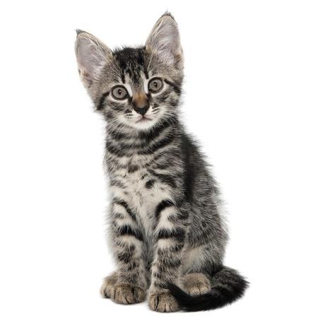gatito gris a rayas con una mueca de sorpresa aislado blanco