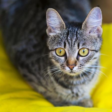 cerca de un gato gris a rayas suaves Foto de archivo