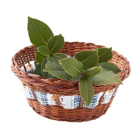 Rama de laurel fresco en la cesta aislada en blanco