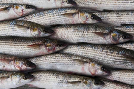 grey mullet: fresh gray mullet fish at the market background