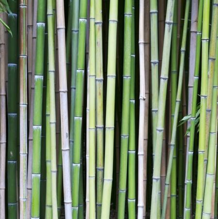 fondo vibrante de madera viejo ?ol de bamb?