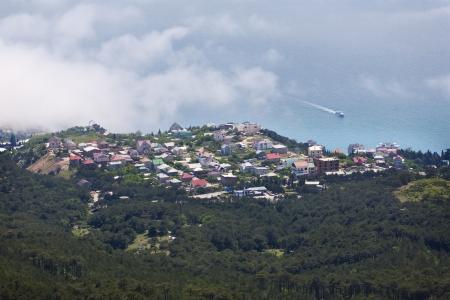 beautiful town by the sea  bird