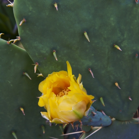 beautiful yellow flowers of blooming cactus close-up Stock Photo