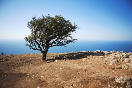 lonely tree on a rock against the sea Stock Photo