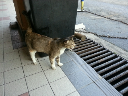 Lost Stray Cat