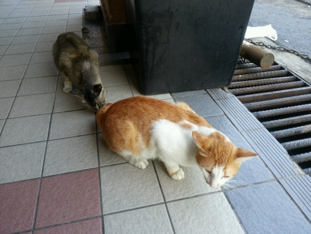 Lost Stray Cats