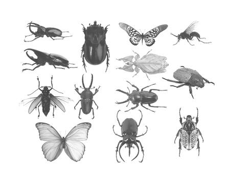 Set of bugs Stock Photo - 17017491