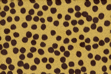Cheetah skin Stock Photo - 17348143
